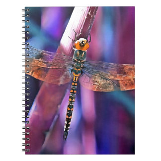 Dragonfly In Orange and Blue Notebooks