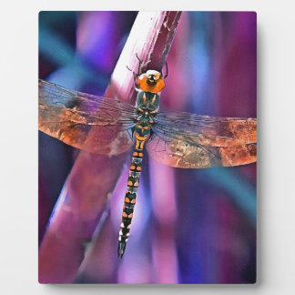Dragonfly In Orange and Blue Plaque