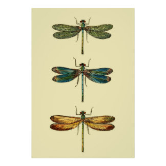 Dragonfly Insects Collection Poster