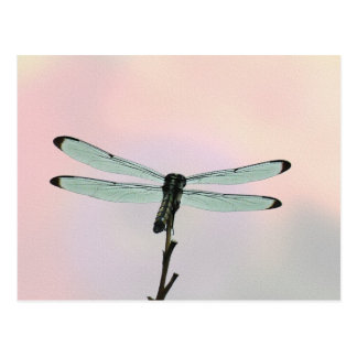 Dragonfly ion Pastels Postcard