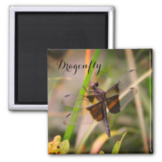 Dragonfly Magnet - Color