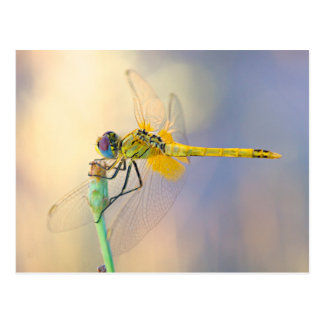 Dragonfly of Several Colors Postcard