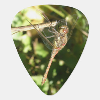 Dragonfly on a Twig Guitar Pick