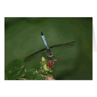 Dragonfly on Flower Photo Art Card