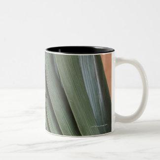 Dragonfly on plant Two-Tone coffee mug