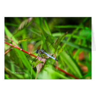 Dragonfly on red leaf card