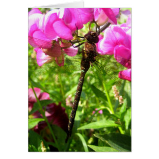 Dragonfly on Sweet Peas Note Card