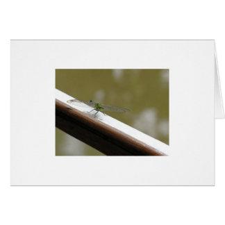 dragonfly on the bayou card