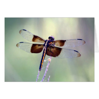 dragonfly - pastel note card