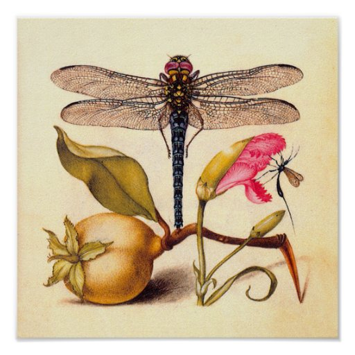 Dragonfly, Pear, Carnation, and Insect Posters