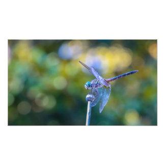Dragonfly Photo Print