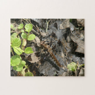 Dragonfly, Photo Puzzle. Jigsaw Puzzle