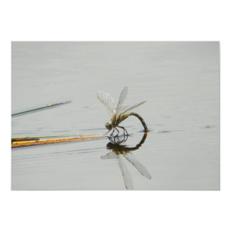 Dragonfly reflection 5x7 paper invitation card