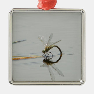 Dragonfly reflection Silver-Colored square ornament