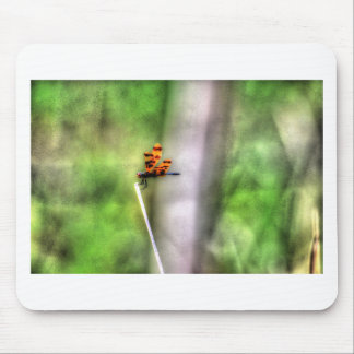 DRAGONFLY RURAL QUEENSLAND AUSTRALIA ART EFFECTS MOUSE PAD