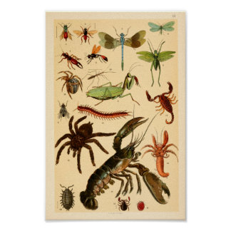 Dragonfly Scorpion Spider Collection Art Print