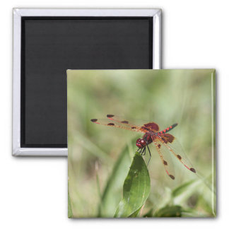 Dragonfly Square Magnet