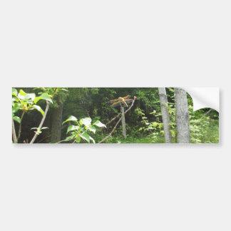 Dragonfly Tree Scene Bumper Sticker