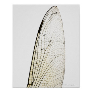Dragonfly wing poster