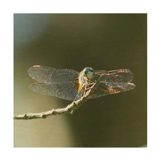 Dragonfly, Wood Photo Print. Wood Print