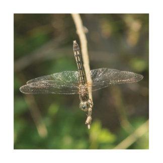 Dragonfly, Wood Photo Print. Wood Wall Art