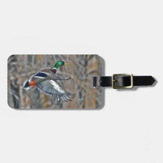 Drake mallard in flight luggage tag