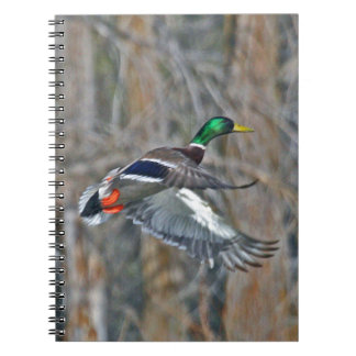 Drake mallard in flight spiral notebooks