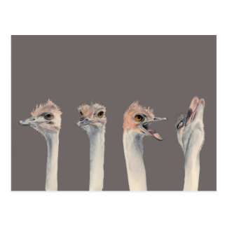 """""""Drama Queen"""" Funny Ostriches Painting Postcard"""