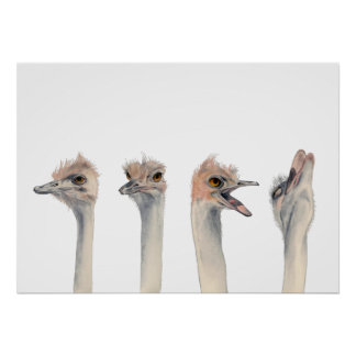 """Drama Queen"" Funny Ostriches Painting Poster"