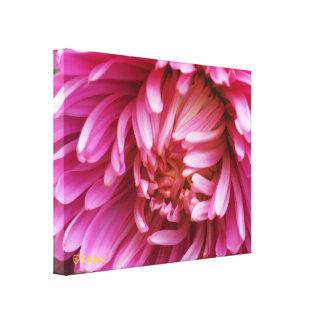 Dramatic pink dahlia blossom photo on canvas
