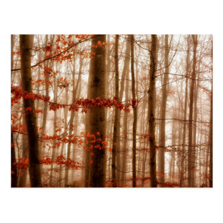Dramatic red foggy winter snowless forest postcard