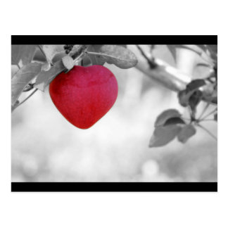 Dramatic Red Heart Shaped Apple Postcard