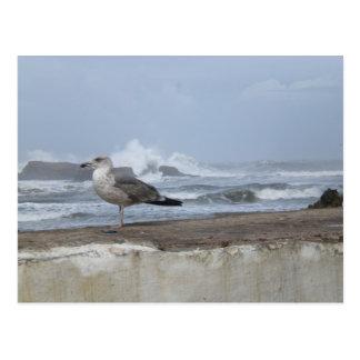 Dramatic Seagull Postcard