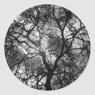 Dramatic Tree Silhouette Classic Round Sticker