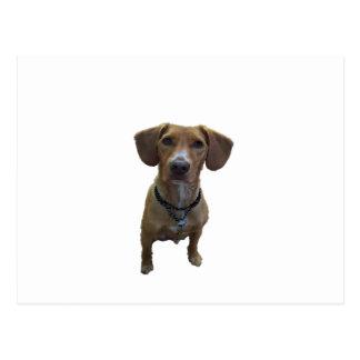 Drawing Dog Postcard