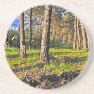 Dreaming Pine Trees into the Evening Light Coaster