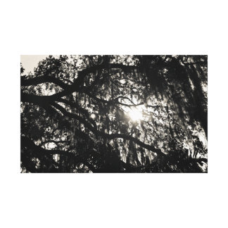Dreaming Under the Oak Tree Wrapped Canvas