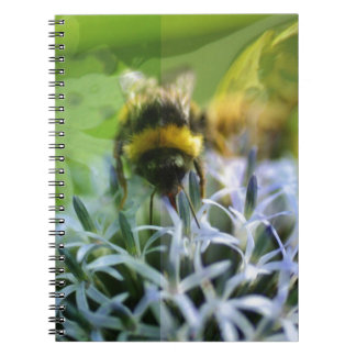 Dreams of the bee notebooks