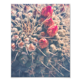 Dreamy Cactus Buds | Photo Print