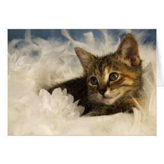 Dreamy Kitten Card