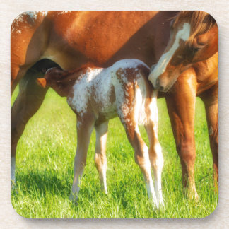 Dreamy, new horse foal with Mama Coaster
