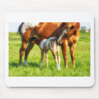Dreamy, new horse foal with Mama Mouse Pad