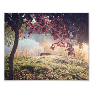 Dreamy park photo print