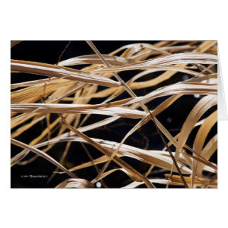 Dried Grasses Card
