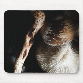 dried mushroom coral, shell, driftwood mouse pad