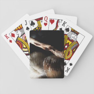 dried mushroom coral, shell, driftwood playing cards