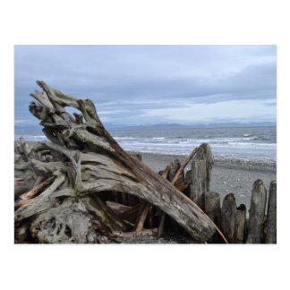 Driftwood at the Beach Postcard