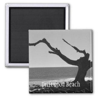 driftwood beach magnet