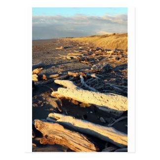 Driftwood tranquility beach New Zealand Postcard