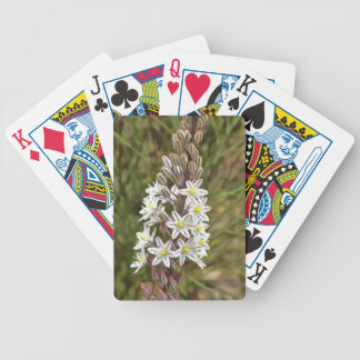 Drimia Maritima Bicycle Playing Cards